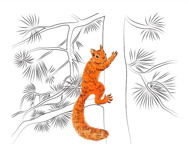 Hand drawn squirrel on the pine tree