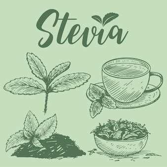 Hand drawn stevia plants,