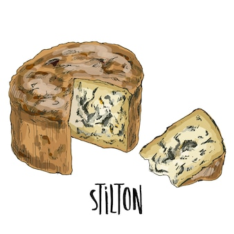Hand drawn stilton cheese illustration