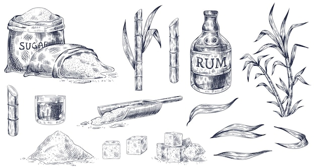Hand drawn of sugar cane and rum