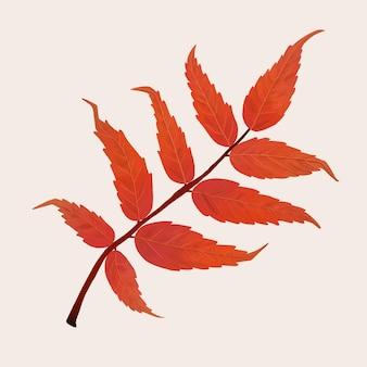 손으로 그린 옻나무 요소 벡터 가을 잎