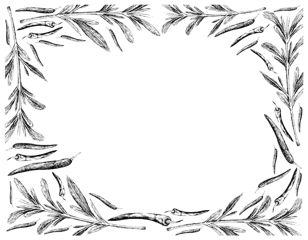 Hand drawn of summer savory with chili peppers frame