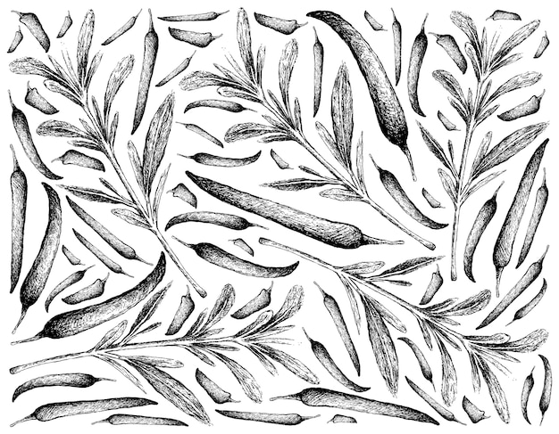 Hand drawn of summer savory with chili peppers
