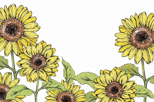 Hand drawn sunflower border