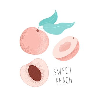 Hand-drawn sweet peach. isolated illustration fruit.