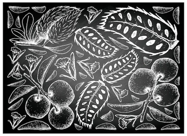 Hand drawn of tallow plum and soursop on chalkboard