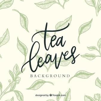 Hand drawn tea leaves background