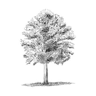 손으로 그린 나무 그림 흰색 절연