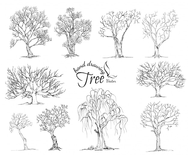 Hand drawn tree isolated on white background