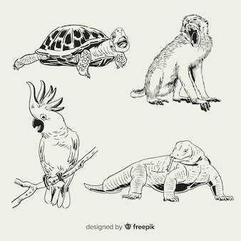 Hand drawn tropical animal collection