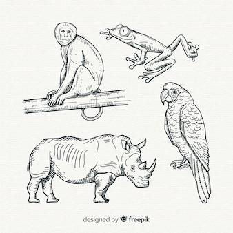 Ручной обращается коллекция тропических животных