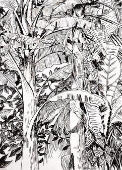 Hand drawn tropical banana sketch