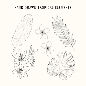 Hand drawn tropical elements
