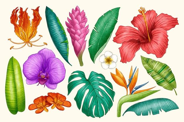 Набор рисованной тропических цветов и листьев
