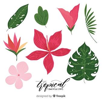 手描きの熱帯の花と葉 無料ベクター