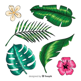 Hand drawn tropical flowers and leaves