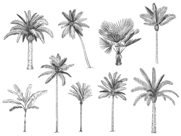 Hand drawn tropical palm trees.