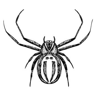 手描きの熱帯のクモ