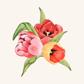손으로 그린 튤립 꽃 절연