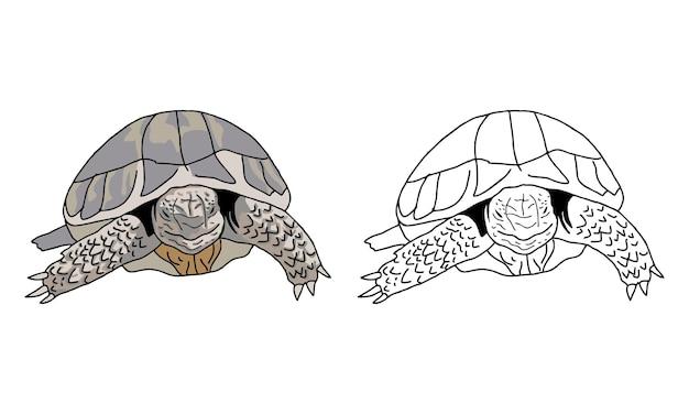 손으로 그린 거북이 색칠 공부 페이지