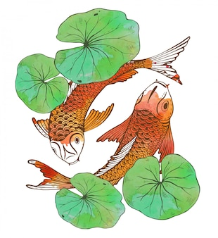 Hand drawn two koi fishes