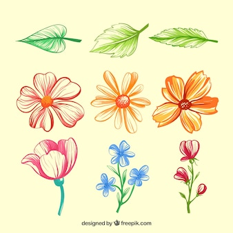 Hand drawn variety of flowers and leaves