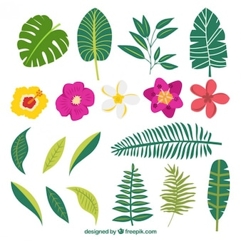 Hand drawn variety of plants and exotic flowers