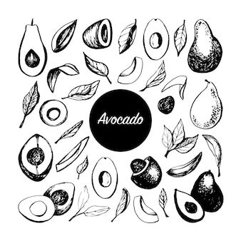 Hand drawn vector avocado set tropical illustration food concept for ecological product