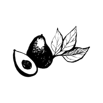 Hand drawn vector avocado on white background tropical illustration food concept