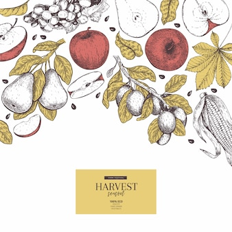Hand drawn vector background with autumn harvest fruits and vegetables.
