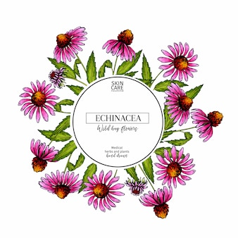 Hand drawn vector echinacea pupurea flower banner.