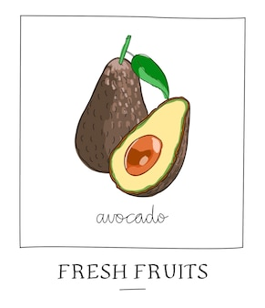 Hand drawn vector illustration of isolated avocado.