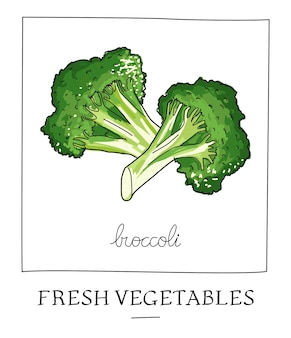 Hand drawn vector illustration of isolated broccoli
