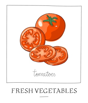 Hand drawn vector illustration of isolated red tomatoes.