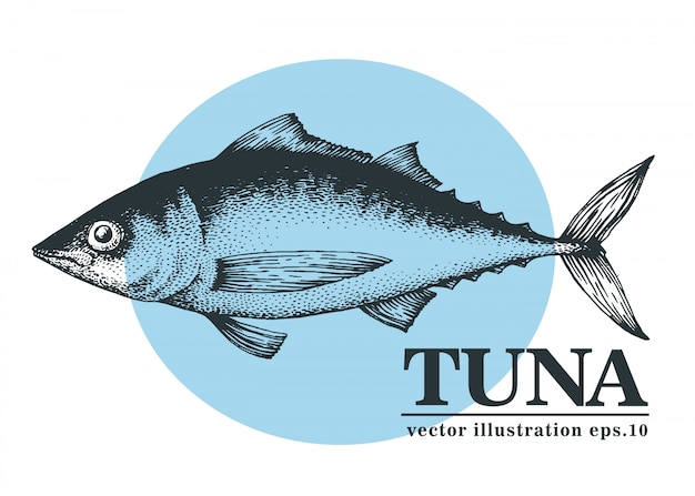 Hand drawn vector illustration of tuna fish.