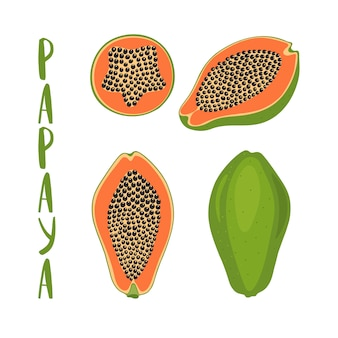 Hand drawn vector illustration of whole and sliced papaya.