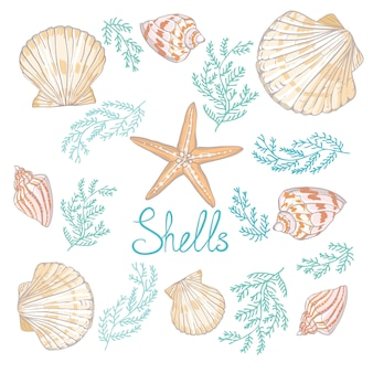 Hand drawn vector illustrations - collection of seashells.