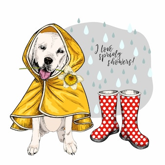 Hand drawn vector labrador retriever in raincoat and gumboots.