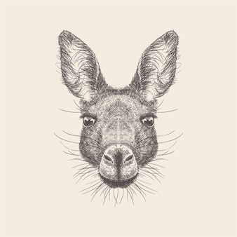 Нарисованный рукой вектор иллюстрации головы осла.