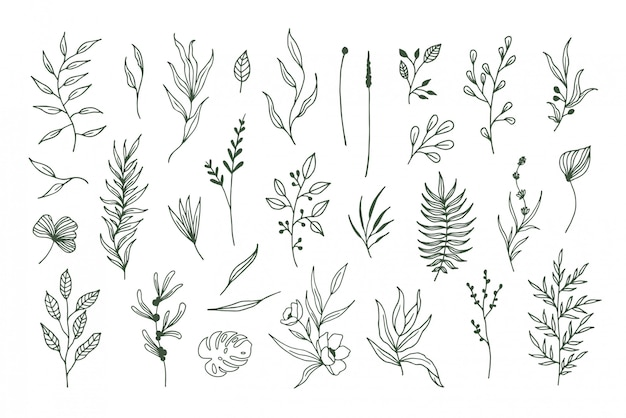 Hand-drawn vector plants, flower elements and leaves