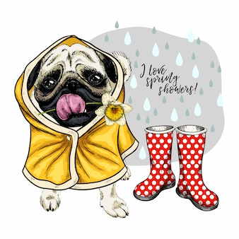 Hand drawn vector pug dog in raincoat and gumboots.