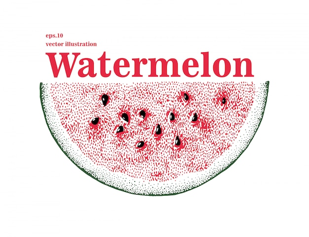 Hand drawn vector watermelon illustration. slice of watermelon.