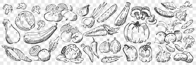 손으로 그린 야채 낙서 세트. 연필 펜 분필의 컬렉션 고추 호박 버섯 가지 토마토 양파 마늘과 오이의 스케치를 그리기. 음식을 수확하고 그림을 농업.