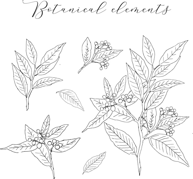 Hand drawn vintage botanical element