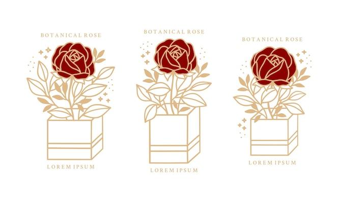 hand drawn vintage botanical rose peony flower set
