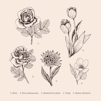 Collezione di fiori botanica vintage disegnati a mano