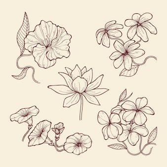 Hand-drawn vintage botany flowers