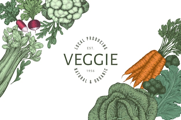 Ручной обращается винтажный цветной дизайн овощей. органические свежие продукты вектор баннер шаблон. ретро овощной фон. традиционные ботанические иллюстрации.