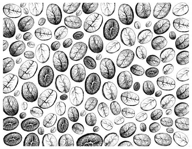 Hand drawn wallpaper of coffee beans background