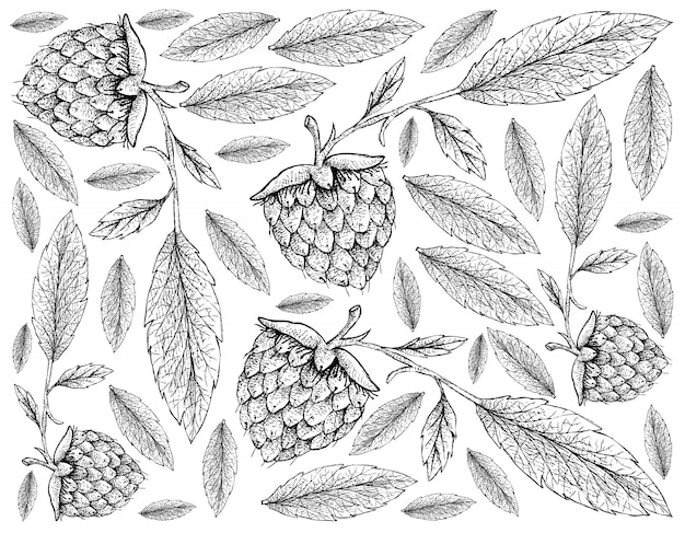 Hand drawn wallpaper of golden raspberries on white background